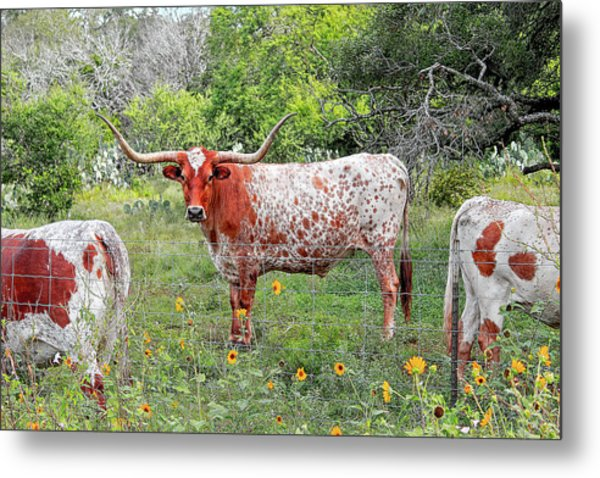 Outflanked Metal Print
