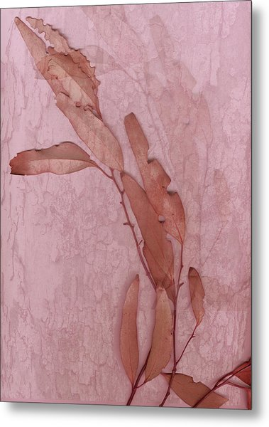 Over Pink Metal Print by Eileen Shahbazian