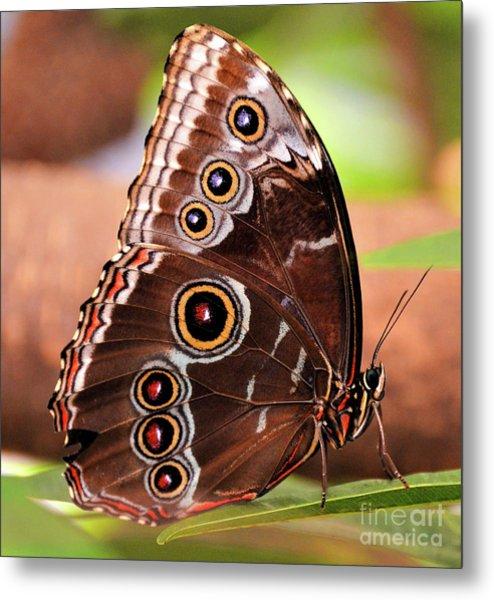 Owl Butterfly Portrait Metal Print