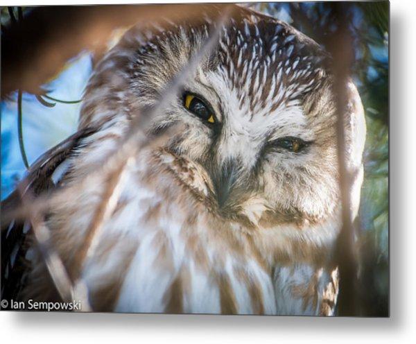 Owl Eyes Metal Print