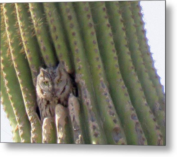 Owl In Cactus Burrow Metal Print