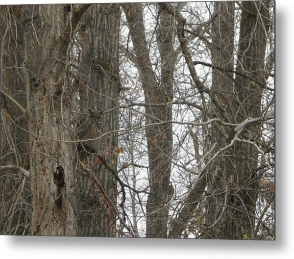 Owl In Camouflage Metal Print