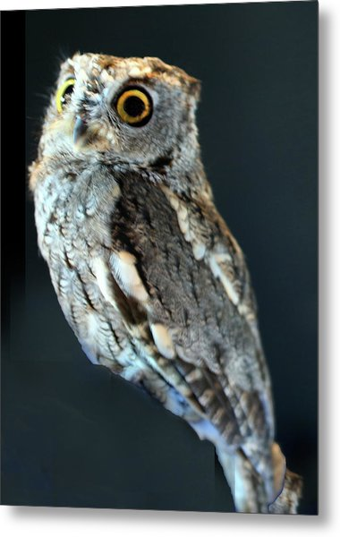 Owl On Black Metal Print by Michael Riley