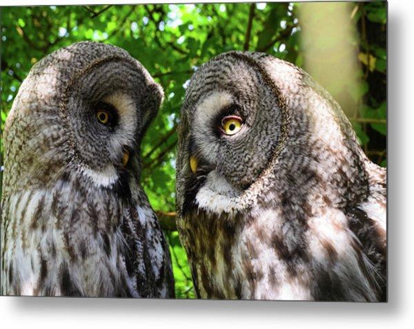 Owl Talk Metal Print