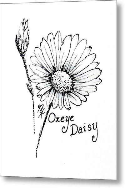 Oxeye Daisy Metal Print