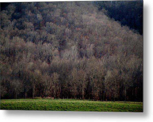 Ozarks Trees Metal Print
