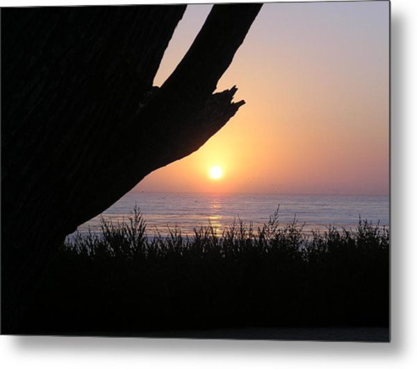 Pacific Cypress Sunset Metal Print by Richard Mansfield