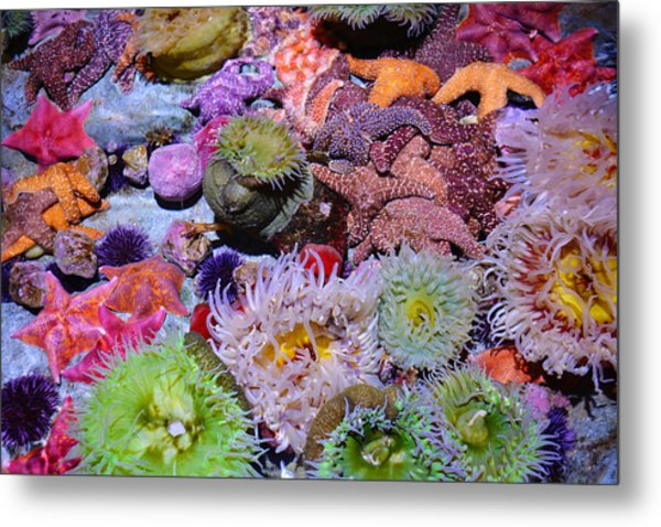 Pacific Ocean Reef Metal Print