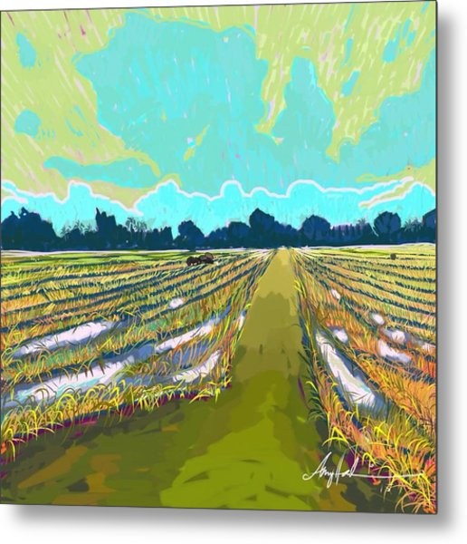 Paddy Field In Impressionism  Metal Print