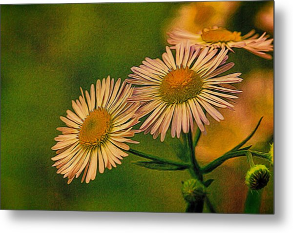 Painted Daisies 2 Metal Print