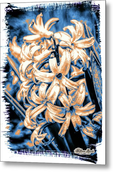 Metal Print featuring the digital art Painted Hyacinth by William Havle