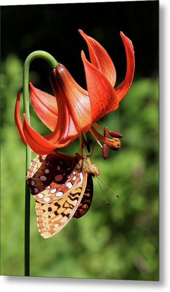 Painted Lady On Lily Metal Print