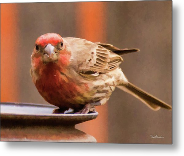Painted Male Finch Metal Print