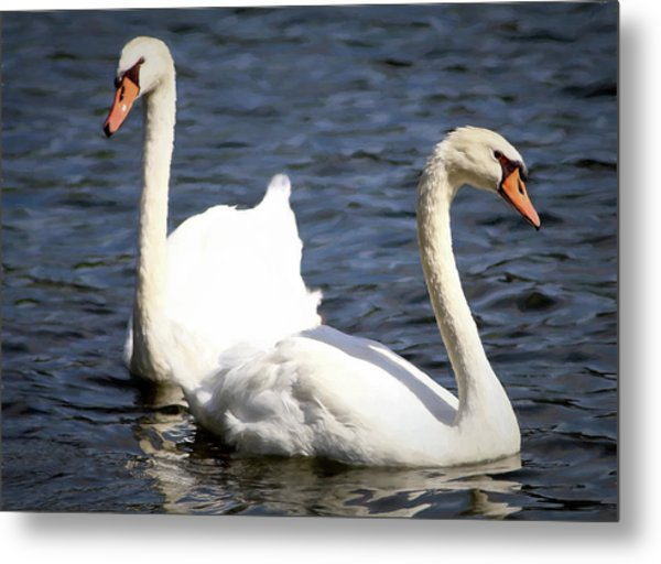 Painted Mute Swans Of Lake Junaluska North Carolina II Metal Print