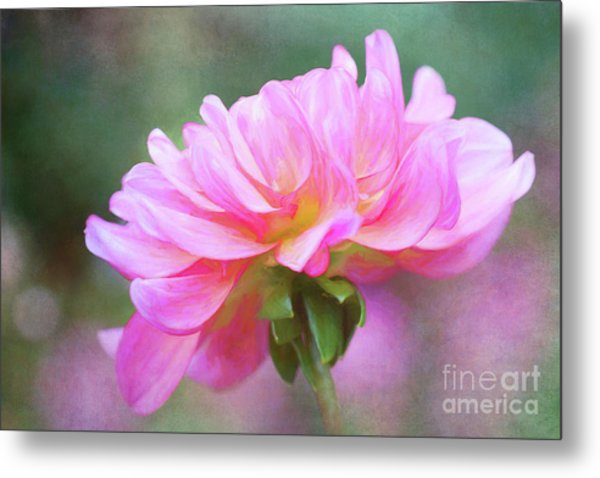 Painted Pink Dahlia Metal Print