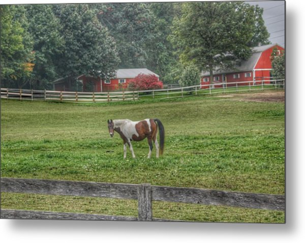 1005 - Painted Pony In Pasture Metal Print