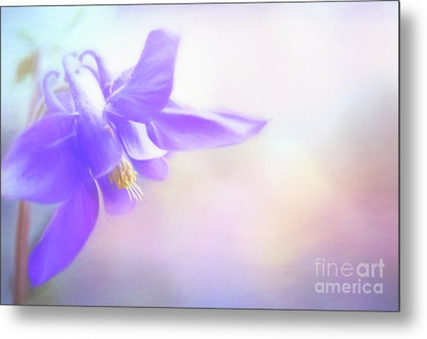 Painted Purple Columbine Metal Print