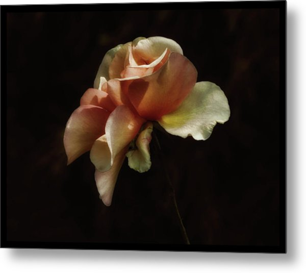 Painted Roses Metal Print