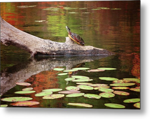 Painted Turtle Metal Print