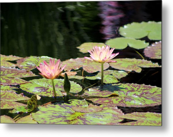 Painted Waters - Lilypond Metal Print