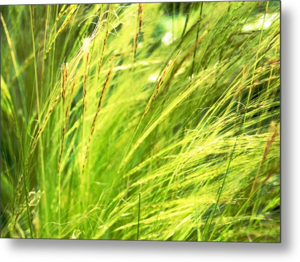 Painting The Wildgrass Metal Print by Jean Booth