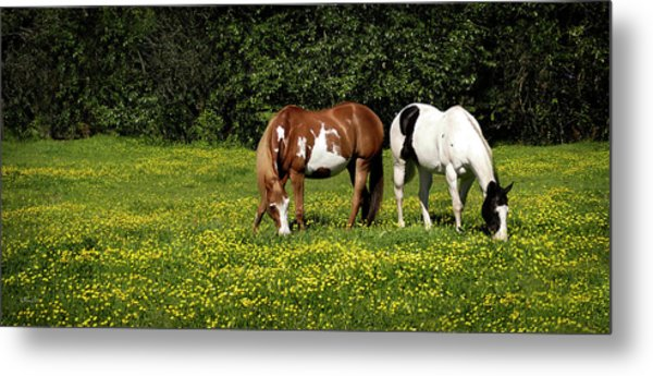 Paints N Buttercups 2 Metal Print