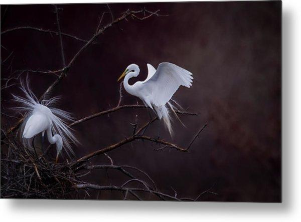 Pair Of Egrets Metal Print