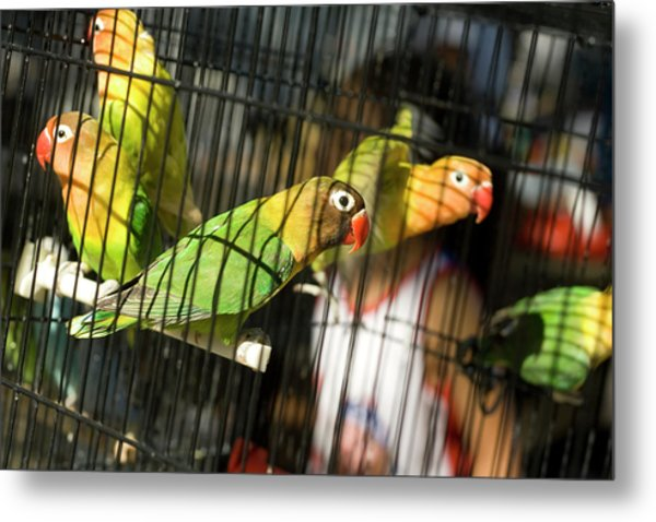Pair Of Keets Metal Print by Carl Purcell