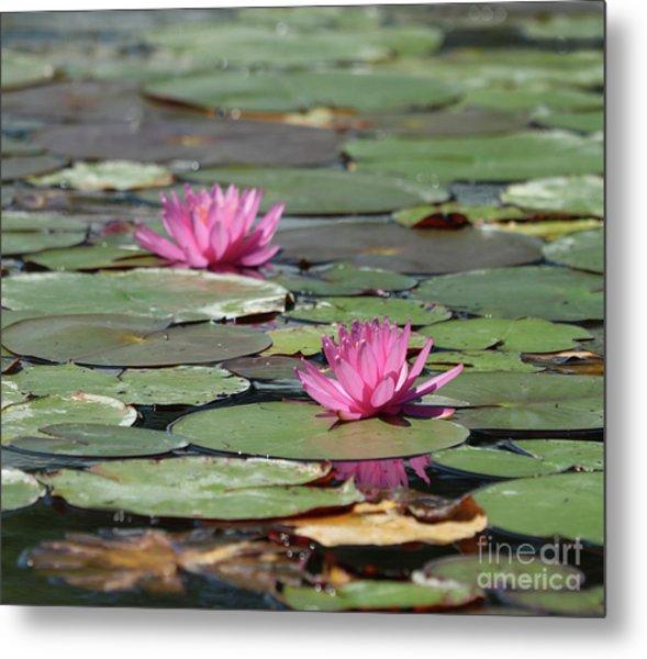Pair Of Pink Pond Lilies Metal Print