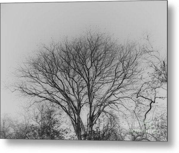 Pale Shades Metal Print