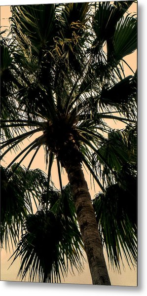Palm Against The Sky Metal Print
