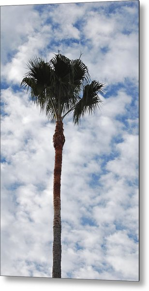 Palm And Clouds Metal Print by Jean Booth