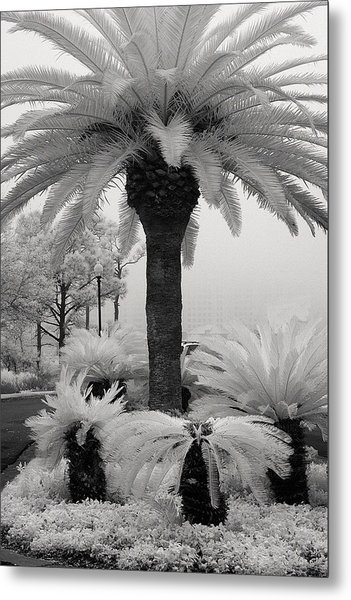 Palm At Gulf Shores Metal Print