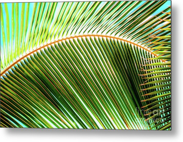 Palm Frond Sway Metal Print