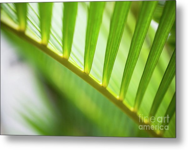 Palm Greenery Metal Print