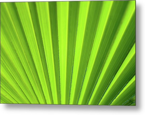 Palm Leaf Abstract Metal Print