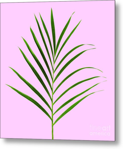 Palm Leaf Metal Print