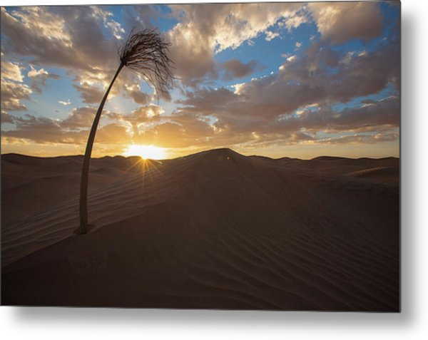 Palm On Dune Metal Print