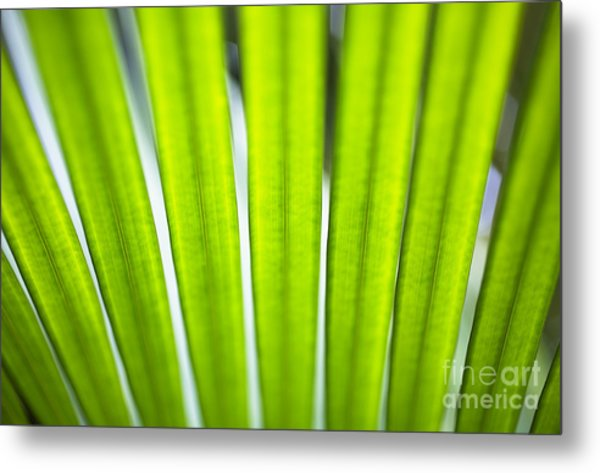 Palm Patterns Macro Metal Print