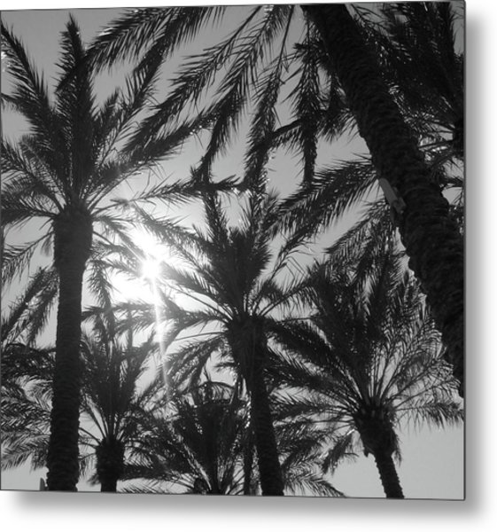 Palm Saturday Metal Print