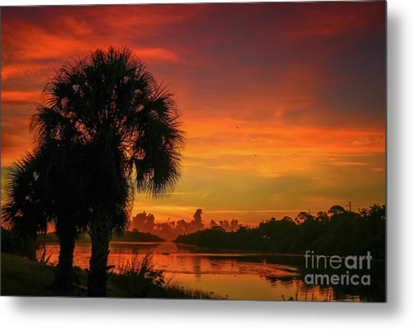 Metal Print featuring the photograph Palm Silhouette Sunrise by Tom Claud