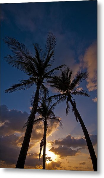 Palm Sunrise Metal Print