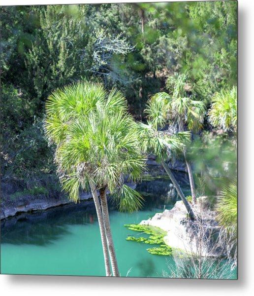 Palm Tree Blue Pond Metal Print