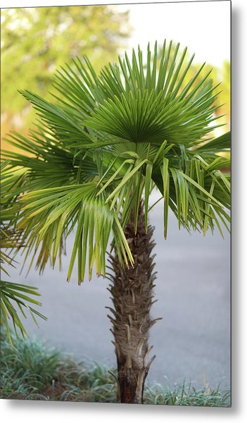 Palm Tree Just There Metal Print
