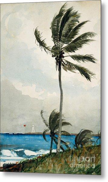 Palm Tree, Nassau, 1898 Metal Print