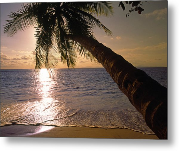 Palm Tree Over The Beach In Costa Rica Metal Print