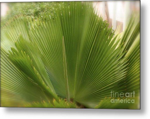 Palm Tree Metal Print by Paula Deutz