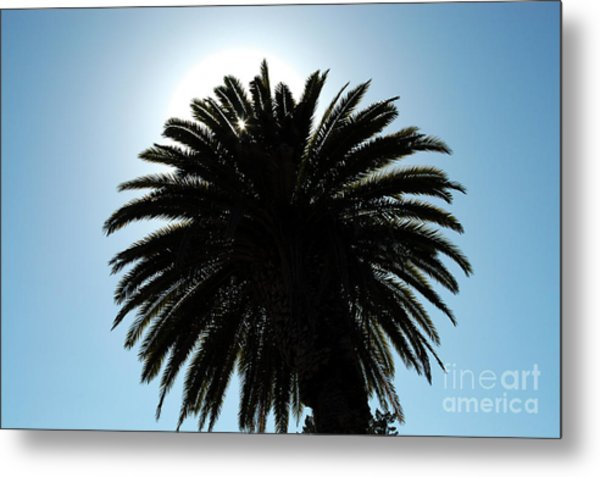 Palm Tree Silhouette Metal Print