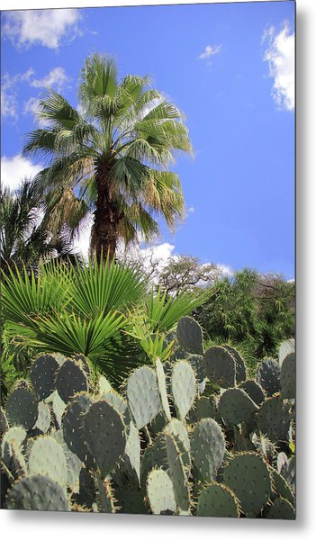 Palm Trees And Cactus Metal Print