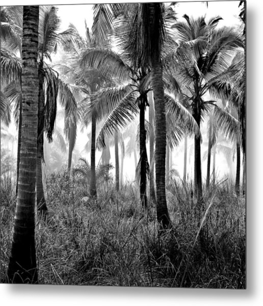 Palm Trees - Black And White Metal Print